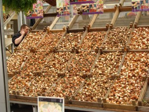 Bulbs for sale in the Floating Flower Market